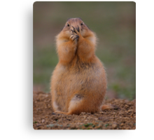 Prairie Dog with Funny Expression Canvas Print