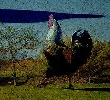 The rooster walk by DerickBurke