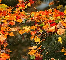 AUTUMN LEAVES. by Chuck Wickham