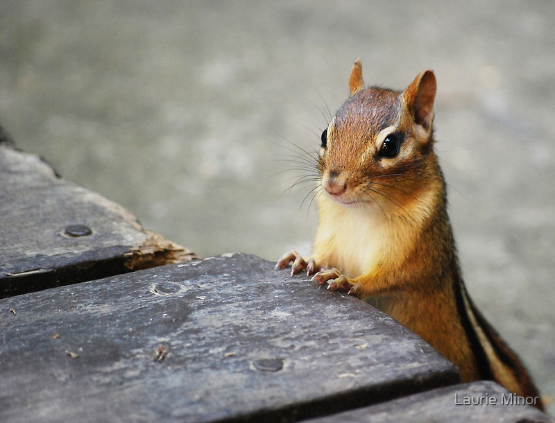 Good Morning, Chippie! by Laurie Minor