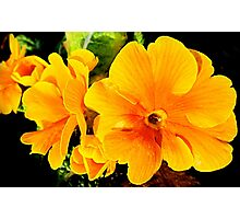 SOLD - ORANGE FLOWER ENHANCED Photographic Print