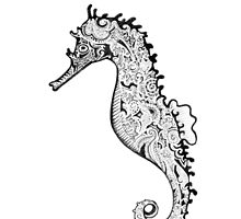 The Seahorse by Emilie Desaunay