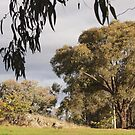 Canberra walk , spring afternoon  by Tom McDonnell