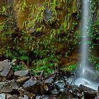 Curtis Falls - Mt Tamborine Qld Australia by Beth  Wode