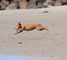 Born To Run by Noel Elliot