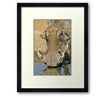 Warthog Pleasure - Quench of Life and Joy Framed Print