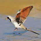 Blur of Flight - Namaqua Dove - African Wildlife by LivingWild