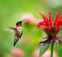 Hummingbird Hovering with Flowers by Christina Rollo