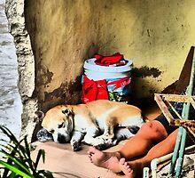 homeless II - sin hogar by Bernhard Matejka
