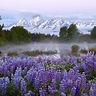 Teton Lupines 2 by David Kocherhans