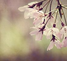 The Beauty of Weeping - Weeping Cherry by Jo Williams