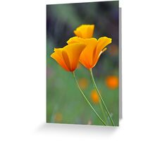 Golden Tufted Poppy Greeting Card