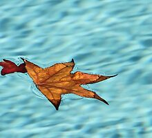Floating Leaves by heatherfriedman