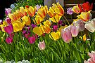 Brightly-Colored Tulips by John Butler
