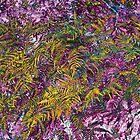 Ferns: Raspberry Lemon Wild by Susan Nixon