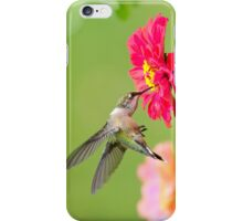 Hummingbird Waiting in the Wings iPhone Case/Skin