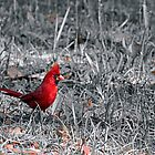 Red Bird and Leaves by 1observer