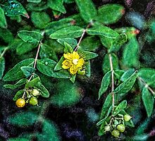 St. John's Wort with Berries by Roger Passman