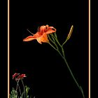 Day Lily Charm by Rosalie Scanlon