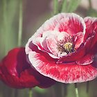Poppies 1 by Jo Williams
