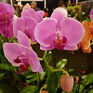 Orchid Show by Barbara Morrison