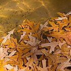 Floating Chaos - Fallen Oak Leaves in the Fountain by Georgia Mizuleva