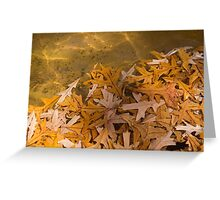 Floating Chaos - Fallen Oak Leaves in the Fountain Greeting Card