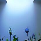 The blue Pool by Angelika  Vogel