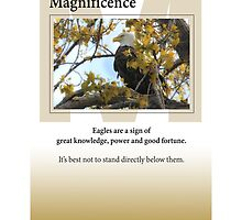 Magnificence by Heartland