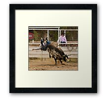 Rodeo Cowboy Thrown from a Bull Framed Print
