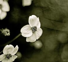 Ranunculus acris by jessicaottowell