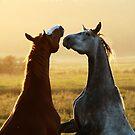 7.9.2014: Horses on Pasture by Petri Volanen