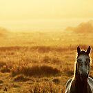 7.9.2014: Horse on Pasture II by Petri Volanen