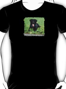 Loki - Swiss Black Labrador T-Shirt