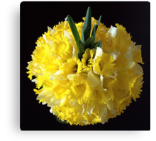 Daffodils ball Canvas Print