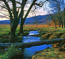 EVENING IN CADES COVE by Chuck Wickham