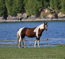 Paint Horse by rachelstone