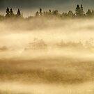 8.9.2014: September Morning I by Petri Volanen