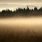 8.9.2014: September Morning II by Petri Volanen