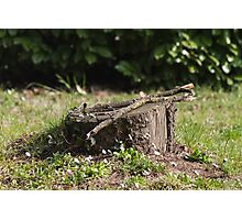 tree trunk on the lawn Photographic Print
