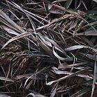 Fallen Reeds by RVogler