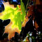 Transition Leaf by Chris Gudger