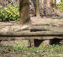 old bench in the park by spetenfia