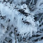 JACK FROST by Marilyn Grimble