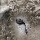 Sheep's eyes  by LydiaBlonde