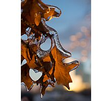 Sparkling Oak Leaf Jewels Photographic Print