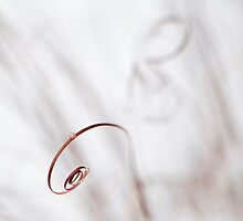 Curl by Anne Gilbert