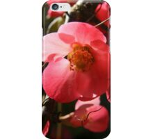 Pink flower - 2011 iPhone Case/Skin