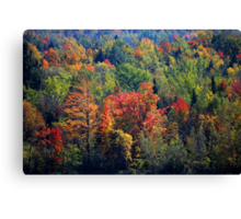 Fall in Franklin Canvas Print