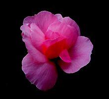 Petals of Beauty by RandomCitizen